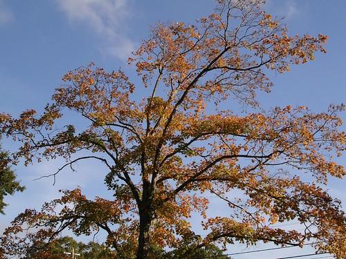 unfallentree