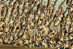 Flock of sandpipers in flight photo by Pat Ulrich