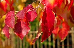 A Touch of Autumn photo by Imagevixen1