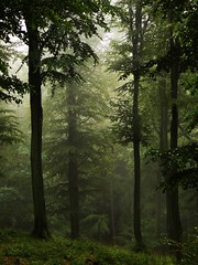 High Forest... in the rain photo by JoannaRB2009