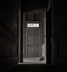 dog-tired photo by History Rambler