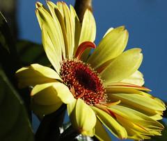 Cores para Quinta Flower! (Explore 03/08/2011) photo by mara zocolotte