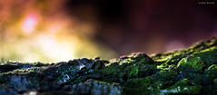 Macro Landscapes - Neon Mountains photo by Chip Gylfe