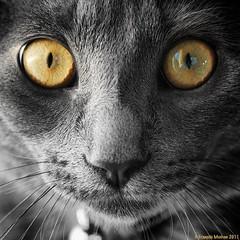 Un regard hypnotique photo by meehanf