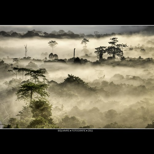 Malaysia: Emerging tree tops [Explored] photo by Bas Lammers