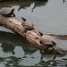 Leadership turtle