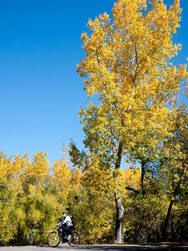 Fall in Calgary, 2011