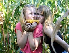 Stealing Corn - Feeling Alright photo by bierfinderlohn