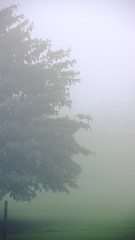 Foggy weather in Finger Lakes