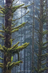 This is British Columbia No.53 - Misty Mystical Moss Forest - Explored 10/18/2011 #425 photo by Wizard of Wonders™