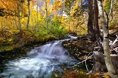 Cascade in a Rainbow Forest photo by Darvin Atkeson