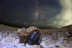 Milky Way Hermit crab photo by masahiro miyasaka