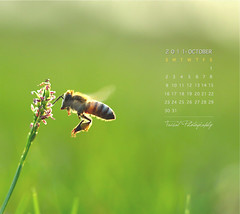October Calendar photo by Faisal | Photography