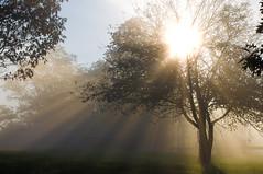 Shining Through photo by Tom Gotzy