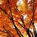 Canopy of orange