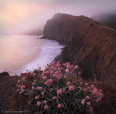 Lost Coast Flowers - Northern California photo by Steve Sieren Photography