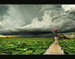 lotus fields and the approaching rain.. photo by PNike (Prashanth Naik..back after ages)