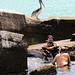 Pelican Rescue 1
