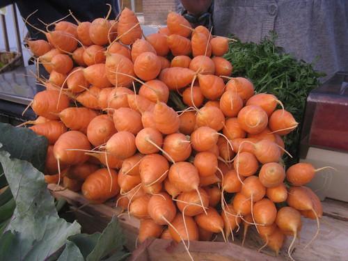 Sundog Organic Farm