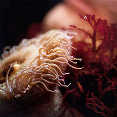 The Life Aquatic photo by •Sarah P•