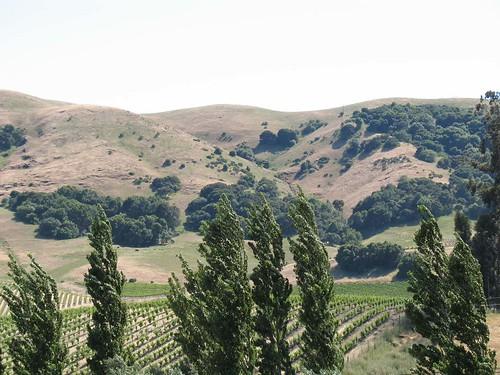 treeshills