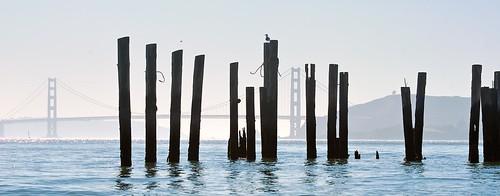 Reed bridge