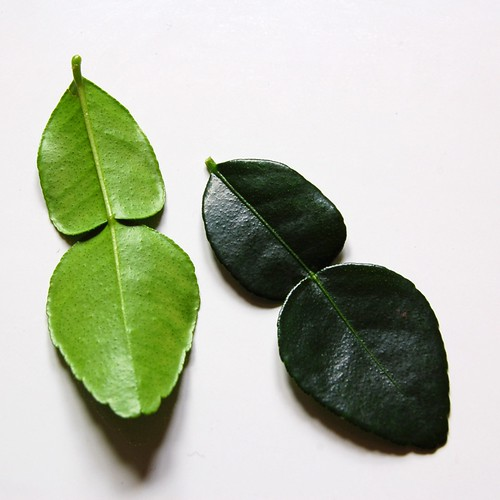 1kaffir lime leaf© by haalo