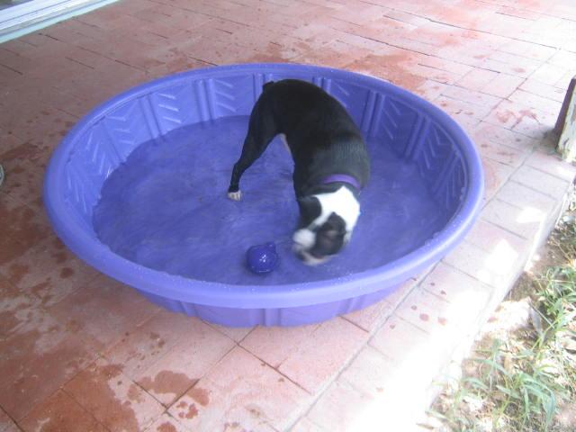 cuz in the pool