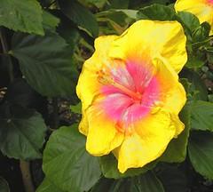 7/2/06: Botanical Gardens I