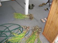 garlic0001