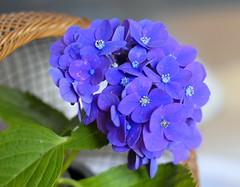 Today's flower shot