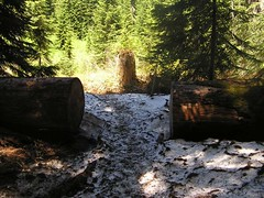 Last of snow on Commonwealth Basin trail (much more snow on the old Cascade trail)