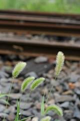 ruin of railway station 03