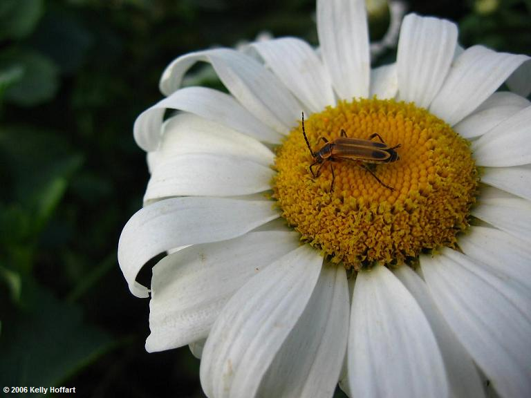IMG_3803 - Bug and Daisy by Kelly Hoffart