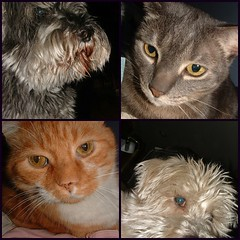 neglected critters: 2 cats; 2 dogs