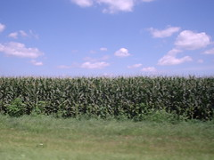 Fields of corn