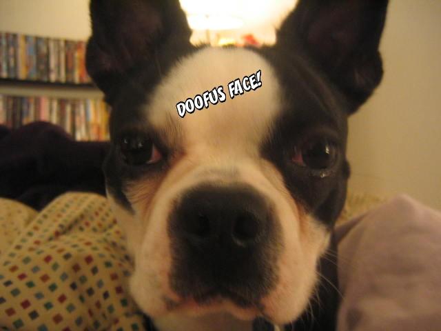 Doofus Face