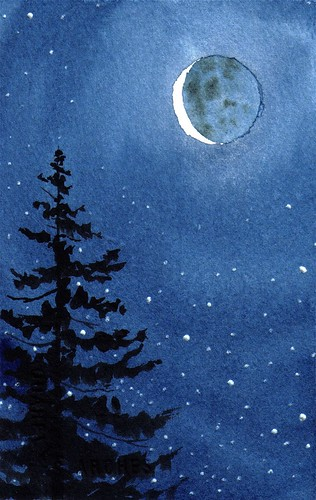 moon & evergreen