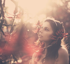 In The Red Forest photo by AnnuskA  - AnnA Theodora