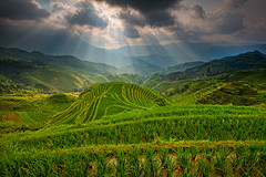 Longji rice terrace photo by ©Helminadia Ranford