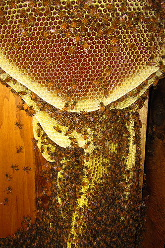 Top Bar Hive Growing