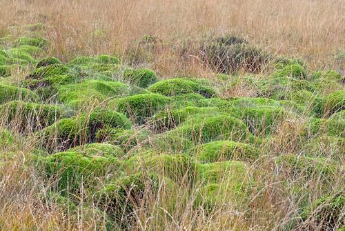 Moss/Moos