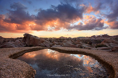 Sunset Reflection - Joshua Tree photo by Steve Sieren Photography