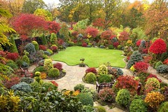 Autumn  garden beautiful acer colours (November 1st) photo by Four Seasons Garden