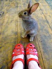 Rosie Rabbit... photo by Loving The Vintage