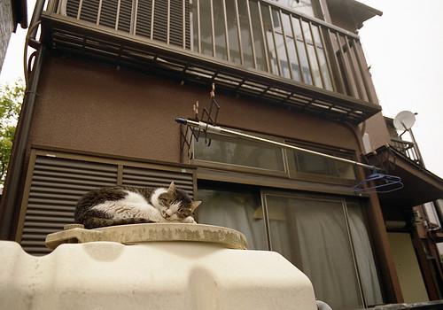 タンクの猫