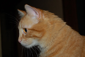 Mi gatito Ranma