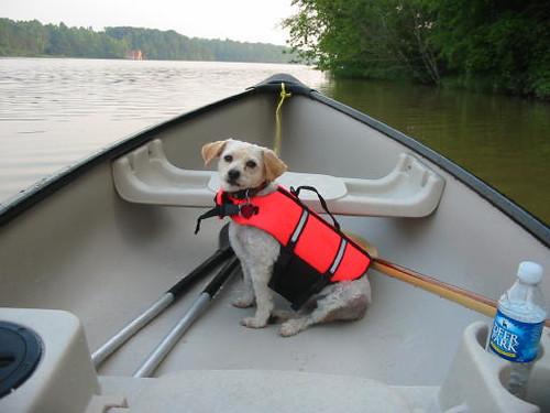 Muffin in Canoe 2