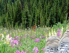 canada camping 06 246
