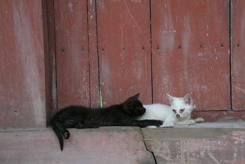 白黒仔猫再び